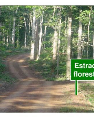Estradas Florestais